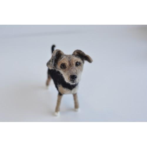 други породи късокосмести кучета 6-8см