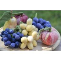 Плодове и зеленчуци (13)